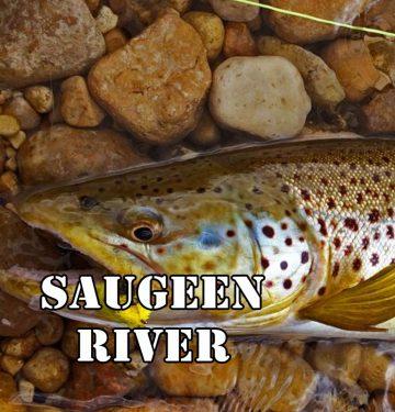 saugeen river