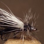 black-stimulator-fly