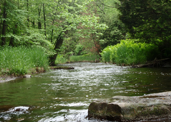 Small trout creek in ontario